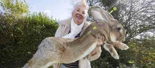 Meet Darius: The World's Biggest Bunny That May Soon Be Outgrown ... - earthporm.com