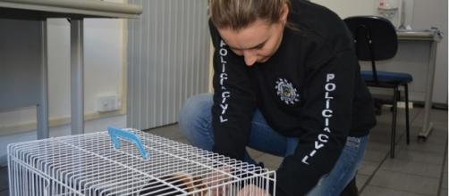 animal foi resgatado pela Polícia Civil