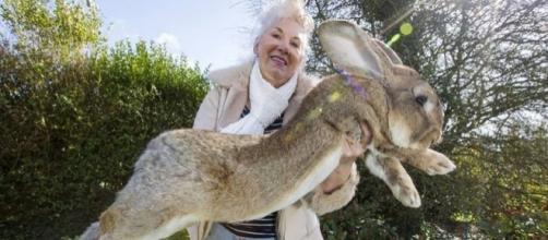 United Airlines investigating death of world's largest rabbit ... - scroll.in