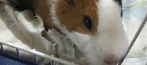 Garota que colocou animal de estimação no micro-ondas recebe ameaça de morte e estupro.