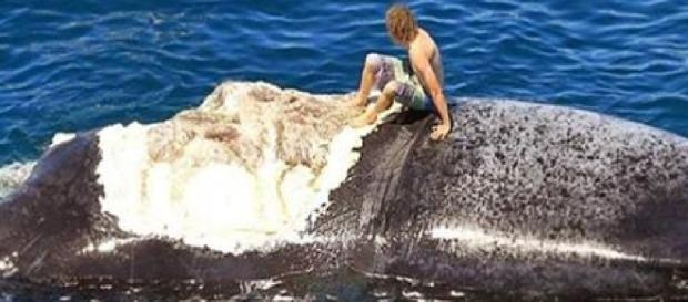 Surfista sobe em baleia - Google