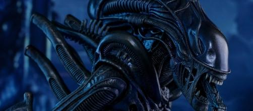 Aliens Alien Warrior Sixth Scale Figure by Hot Toys | Sideshow ... - sideshowtoy.com