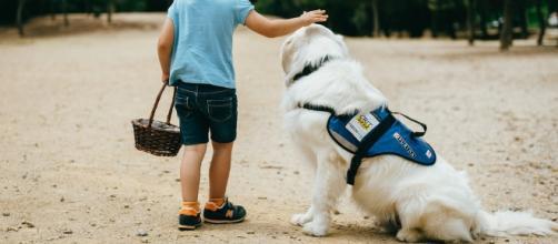 Asociación Autismo Costa del Sol: Perros de asistencia para niños ... - blogspot.com