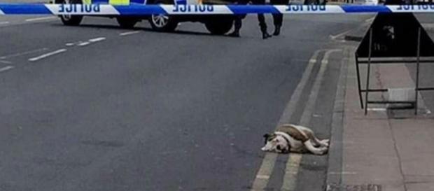 Policias dispararam contra os animais