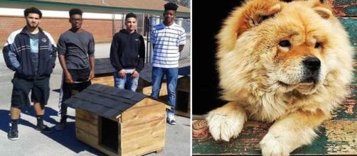 Amazing how High School Students Build Free Houses For Pets To Protect Them ... - suggestedpost.eu