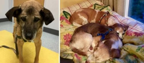 Couple Ensuring Homeless, Terminally Ill Dogs Live 'Happily Ever ... - liftable.com