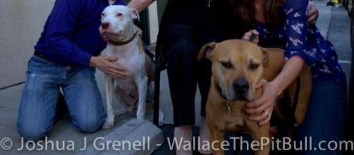 Vicktory dogs | Have dog blog will travel - celiasue.com