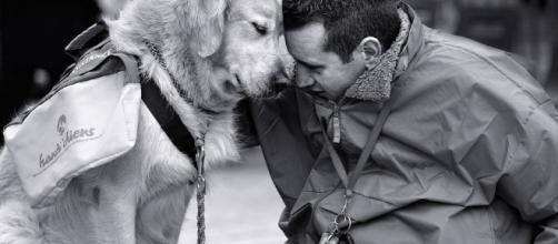 Ca)Nine Reasons Dogs are Truly Man's Best Friend - theodysseyonline.com