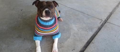 Dark color Dogs Get Adorable Sweaters To Make Them More Adoptable - thedodo.com