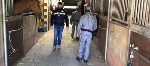 Torino, arrestati titolari del maneggio di Caluso