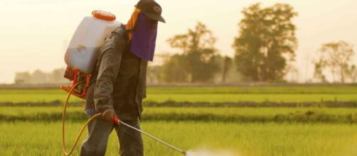 New Studies Reveal Damaging Effects of Glyphosate - mercola.com