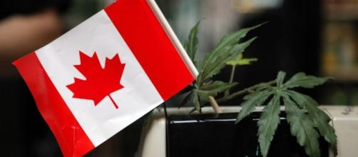 Canada Set to Legalize Marijuana in 2018 - SIGNAL - signalng.com