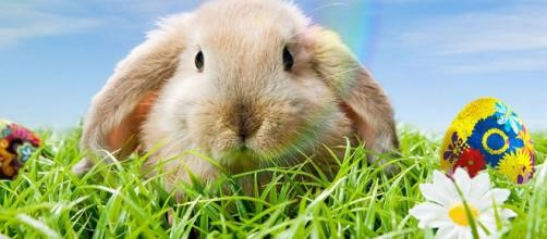Why Is The Bunny Associated With Easter? - zidbits.com