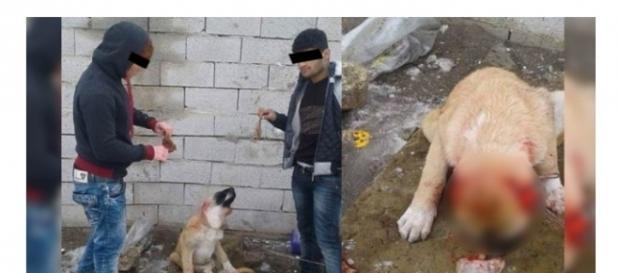 Quelle: Facebook - Türken schneiden Hund die Ohren ab