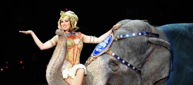 Ringling Bros. circus will close after final May shows | 89.3 KPCC - scpr.org