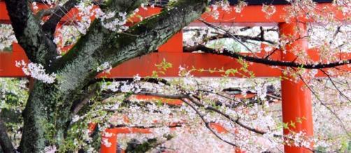 """Sakura"""", narraciones de un artista en busca de la primavera ... - culturacolectiva.com"""