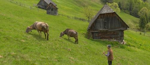 Moieciu de Sus, Roumanie au printemps