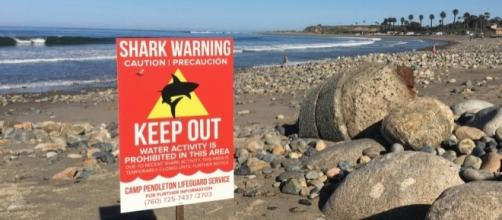 Rescuers recount shark attack at San Onofre State Beach, use surf ... - ocregister.com