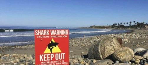 California shark attacks: Here's why they're on the rise - San ... - mysanantonio.com