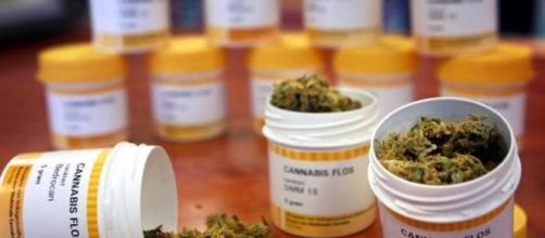 La cannabis farmaceutica ora disponibile nelle Farmacie di Forlì ... - forlitoday.it