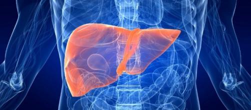 Tumore al fegato: fattori di rischio, sintomi, diagnosi, cura e ... - meteoweb.eu