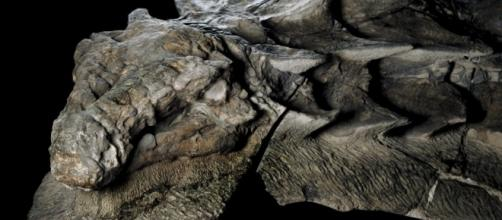 Rare as winning the lottery: New dinosaur fossil so well-preserved ... - democraticunderground.com