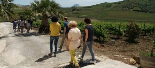 Tour alle Cantine Alessandro di Camporeale.
