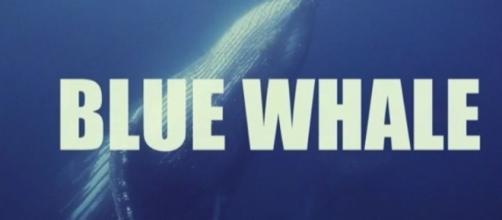 Blue Whale, il servizio de Le Iene che ha sconvolto il pubblico