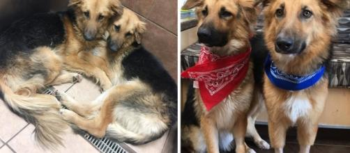 2 dogs were abandoned and refused to let go of each other - now ... - newsner.com