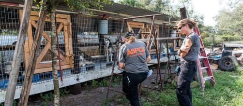 UPDATE: View New Video Footage from Our FL Puppy Mill Raid | ASPCA - aspca.org