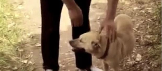 Cachorro sentiu o cheiro do recém-nascido