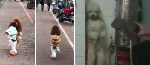 A triste história dos cachorros que são maltratados (Foto: Reprodução/Vídeo)