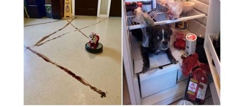 Pets, quando deixados sozinhos em casa, fazem arte