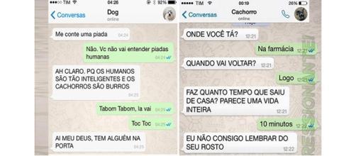 As conversas que os cachorros teriam com seus donos no WhatsApp