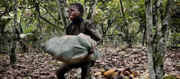 c te d 39 ivoire le travail des enfants dans l 39 exploitation des f ves de cacao. Black Bedroom Furniture Sets. Home Design Ideas