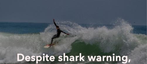 9 sharks at Poche Beach, 11-footer at San Clemente Pier ... - ocregister.com