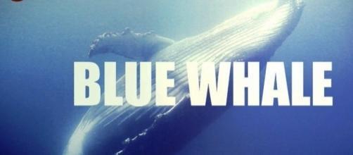 """Il fenomeno del """"Blue Whale"""", cosa è?"""