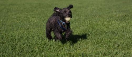 Off-leash dog parks can be branded as 'dangerous' by professional trainer ... - net.au