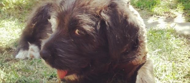 InstaLos perros: un vínculo afectivo de confianza incondicional