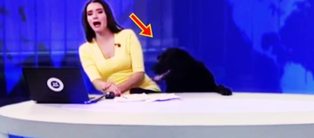Cão invade estúdio ao vivo - Google