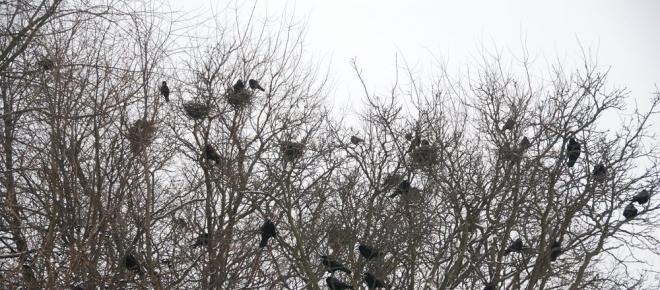 Ptaki ofiarą ustawy Szyszki. O co chodzi?