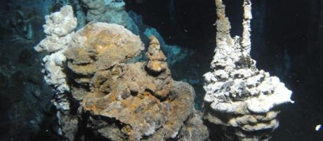 Missing link in evolution of complex life found - Market Business News - marketbusinessnews.com