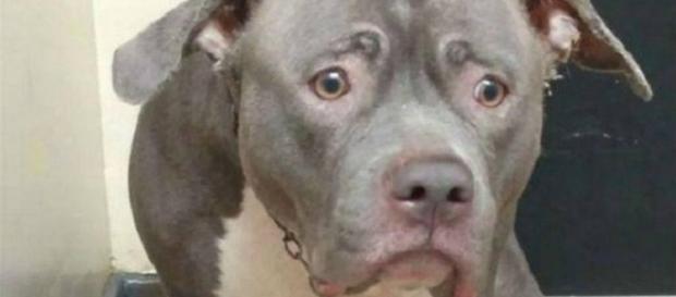 Cadela 'chora' ao ser deixada em abrigo, comove as redes e é adotada