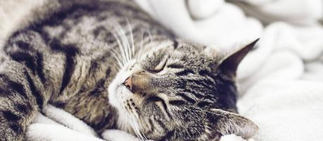 L'empathie du chat, antidote du stress professionnel