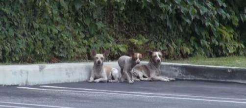3 dogs were just dumped out in the street. Luckily, their fate ... - pawpulous.com