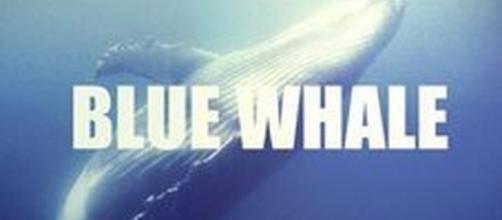 Blue Whale, il tragico gioco che porta al suicidio: ecco le ... - leggo.it