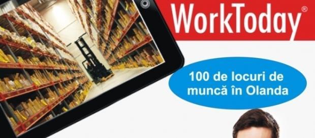 Locuri de muncă în Olanda pentru români