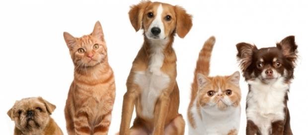 Do pets go to heaven? - Photo: Blasting News Library - hunterrandr.com