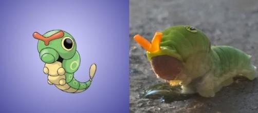 Conheça 10 Pokémons inspirados em seres da vida real (Foto: Reprodução/Garotas Geeks)