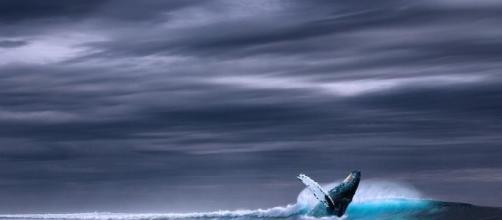 El juego de la ballena azul podría tener ya adeptos en España